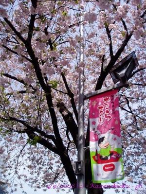 060409shinmachi_sakurap