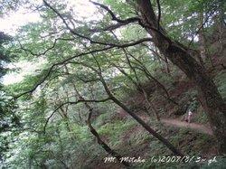 Mitake_tree01_3