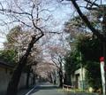 06sakura_3