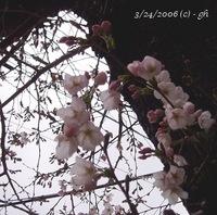 sakura_03_2